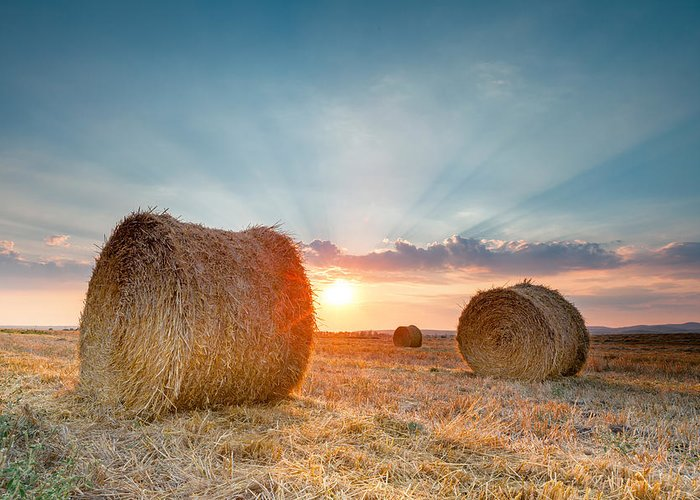 Bales Greeting Card featuring the photograph Sunset Bales by Evgeni Dinev