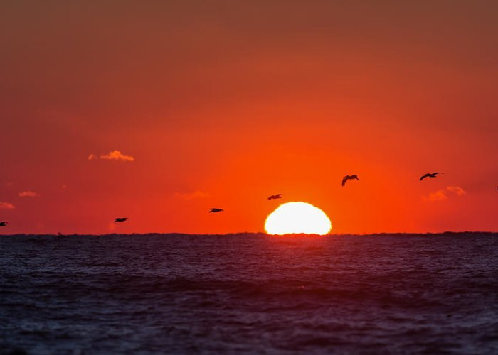 Beach Greeting Card featuring the photograph Sunset by David Faison