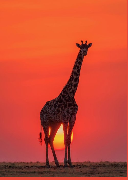 Designs Similar to Sunset Giraffe by Henry Zhao