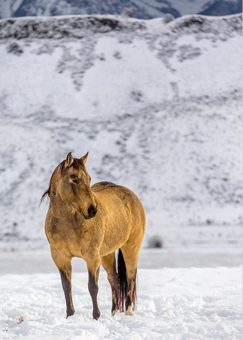 Mountains Greeting Card featuring the photograph Sunset Horse In Montana by Thomas Szajner