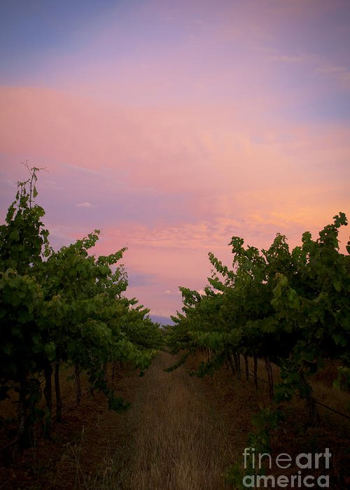 Margaret River Greeting Card featuring the photograph Sunset On Vines by Serene Maisey