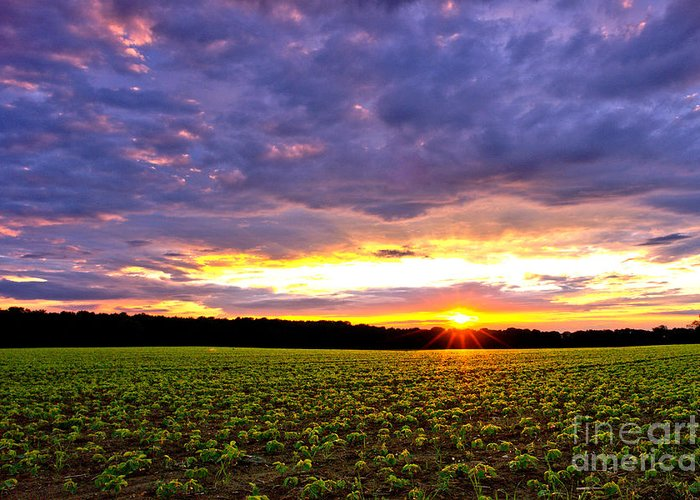 Sunset Greeting Card featuring the photograph Sunset Over Farmland by Olivier Le Queinec