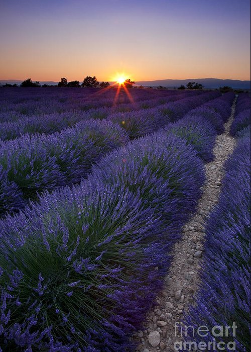 Lavender Greeting Card featuring the photograph Sunset Over Lavender by Brian Jannsen