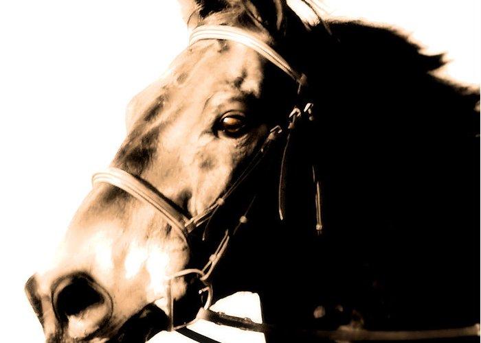 Horse Greeting Card featuring the photograph Sunset Run by Nina Corbitt