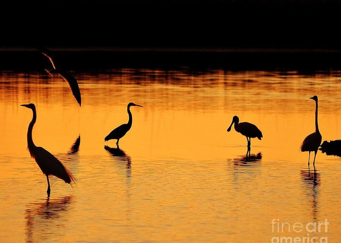 Wading Bird Silhouettes Greeting Card featuring the photograph Sunset Silhouette by Al Powell Photography USA