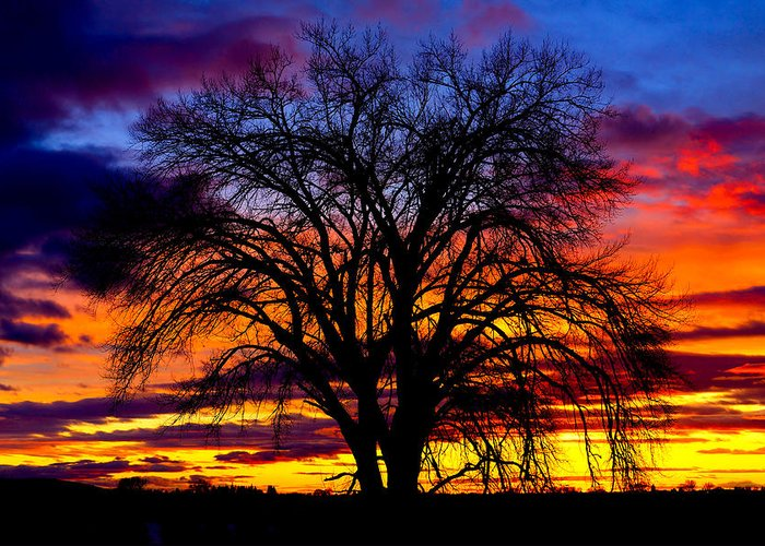 Sunset Greeting Card featuring the photograph Sunset Silhouette by Greg Norrell