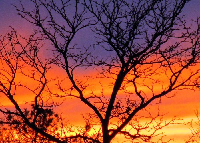Sunset Greeting Card featuring the photograph Sunset With Tree Silhouette by Tamara Lee Madden