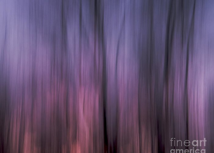 Landscape Greeting Card featuring the photograph Sunset Through The Trees by Lili Feinstein