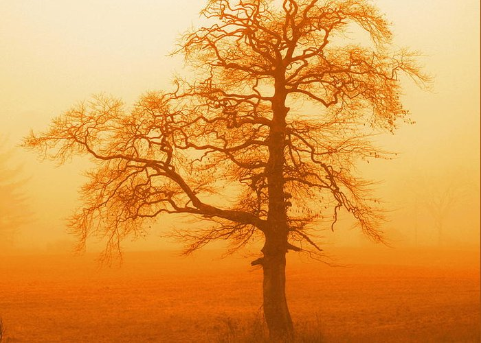 Tree Greeting Card featuring the photograph Sunset Tree by Jonny Rushton