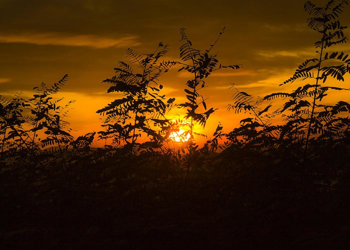 Sun Greeting Card featuring the photograph Sunset Tree by Kristian Chlebus