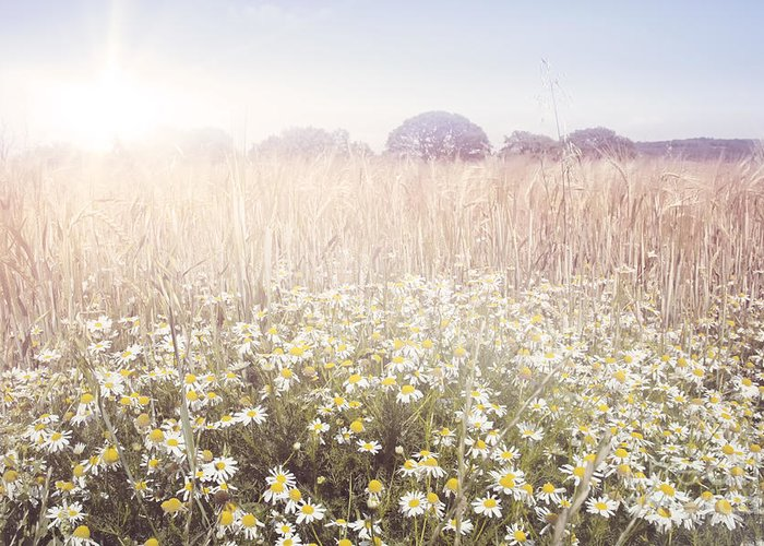 Sun Greeting Card featuring the photograph Sunshine Over The Fields by Natalie Kinnear
