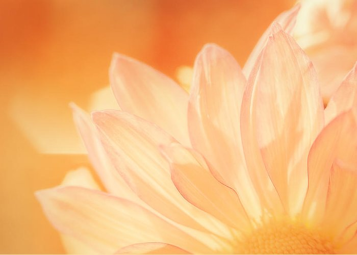 Flower Greeting Card featuring the photograph Sunshine by Scott Norris