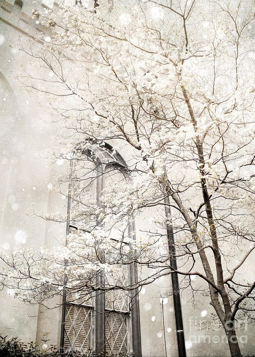 Snow On Trees Greeting Cards