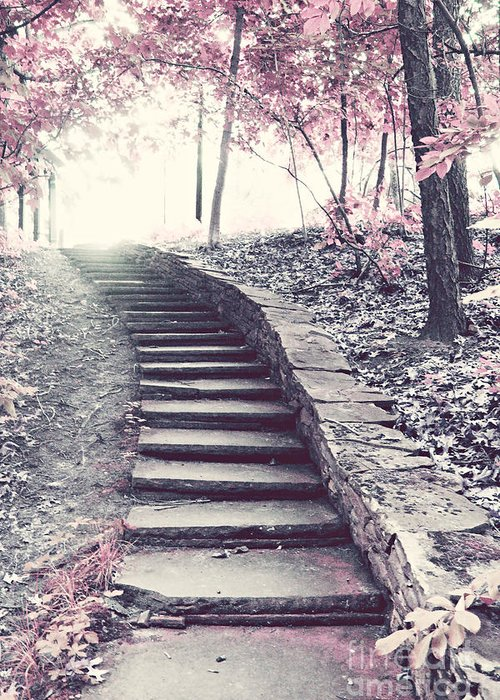 Pink Stairs In Woodlands Greeting Cards