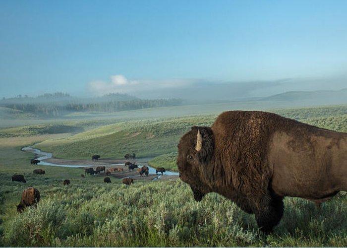Yellowstone Greeting Cards