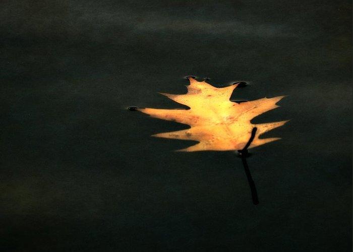 Autumn Leaf On Water Digital Art Greeting Cards