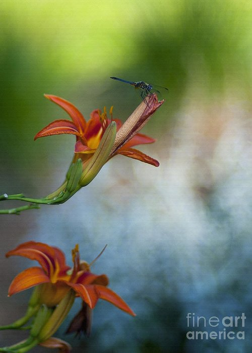 Floral Greeting Card featuring the photograph The Wood Lily And Dragon Fly by Lee Craig
