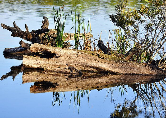 Alligator Greeting Card featuring the photograph Swamp Scene by Al Powell Photography USA