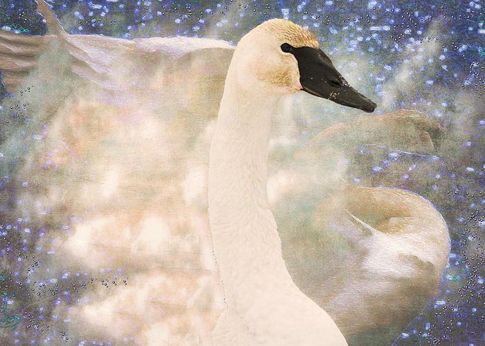 Bird Greeting Card featuring the photograph Swan Journey by Kathy Bassett