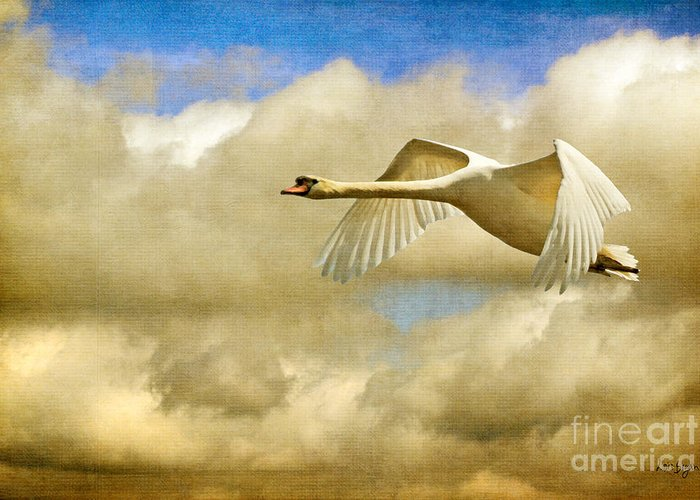 Flying Mute Swan Greeting Cards