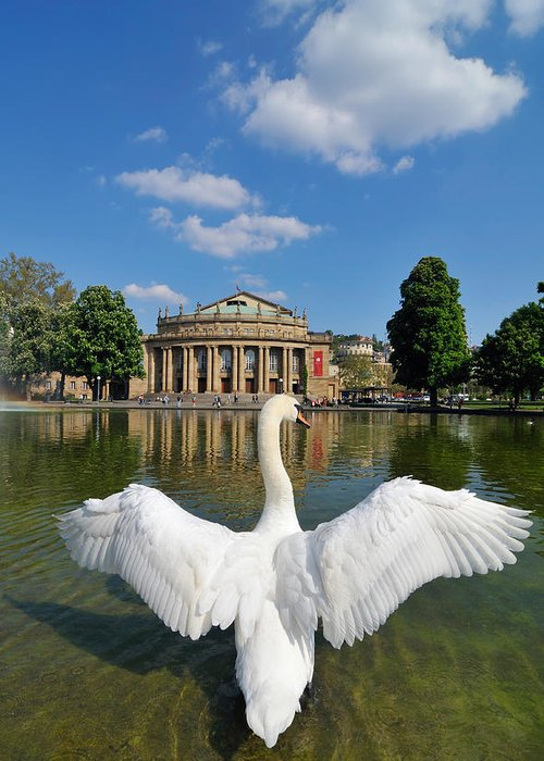 Swan Greeting Card featuring the photograph Swan Spreads Wings In Front Of State Theatre Stuttgart Germany by Matthias Hauser