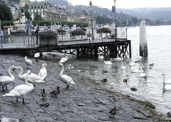 Berthed Ships Greeting Card featuring the photograph Swans And Ducks In Lake Lucerne In Switzerland by Ashish Agarwal