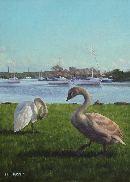 Christchurch Greeting Card featuring the painting swans at Christchurch harbour by Martin Davey
