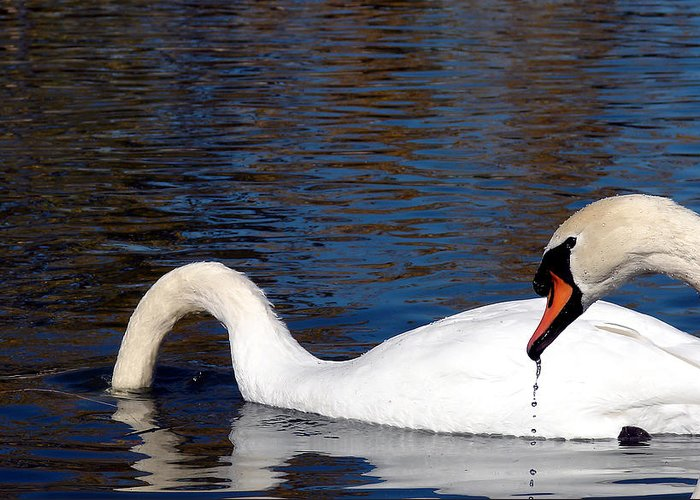 Swan Greeting Card featuring the photograph Swans by Cassie Peters