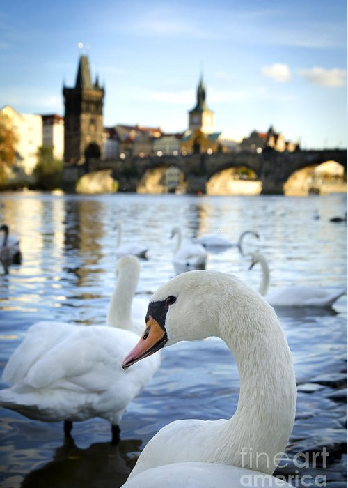 Prague Greeting Card featuring the pyrography Swans On Vltava River by Jelena Jovanovic