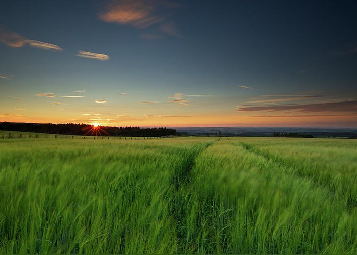 Tranquility Greeting Card featuring the photograph Swaying Barley At Sunset by By Simon Gakhar