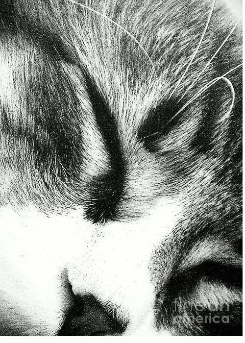 Maine Coon Greeting Card featuring the photograph Sweet Dreams by Jacqueline McReynolds