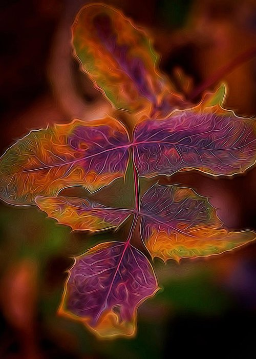 Abstract Greeting Card featuring the photograph Swirling Leaves by Betsy A Davis