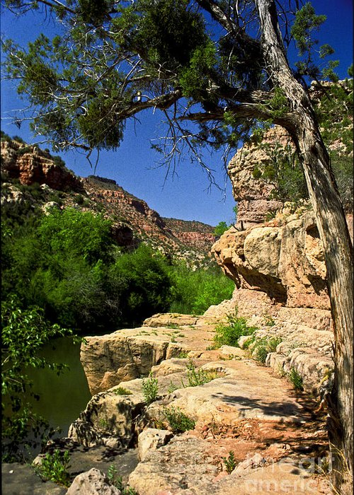 Arizona Greeting Card featuring the photograph Sycamore Canyon by Kathy McClure