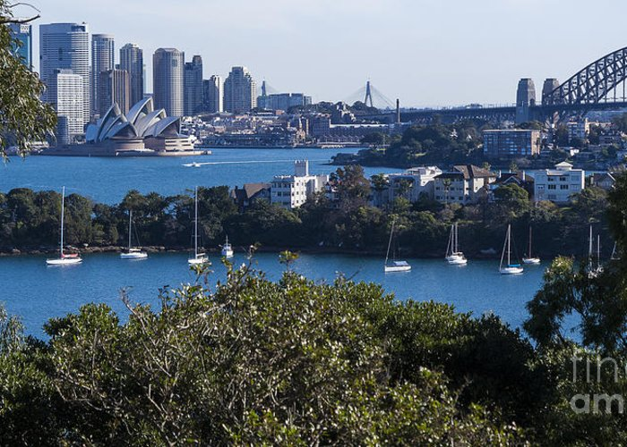 Australia Greeting Card featuring the photograph Sydney Harbour by Steven Ralser