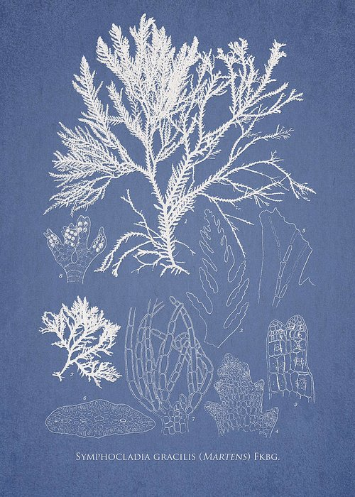 Algae Greeting Card featuring the digital art Symphocladia Gracilis by Aged Pixel