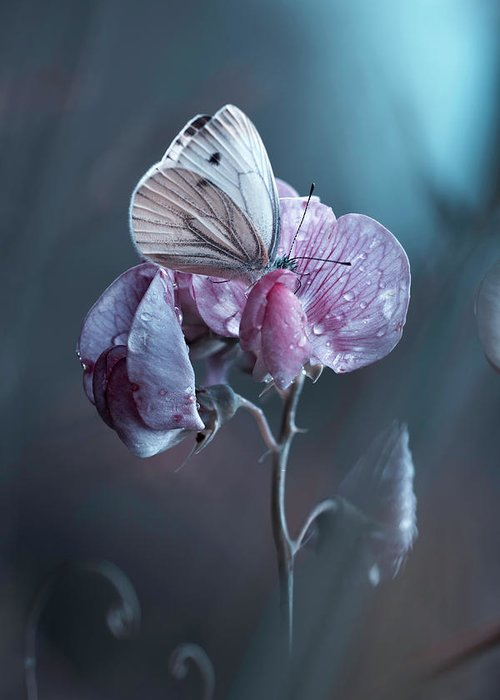 Butterfly Greeting Card featuring the photograph Tainted Love by Fabien Bravin