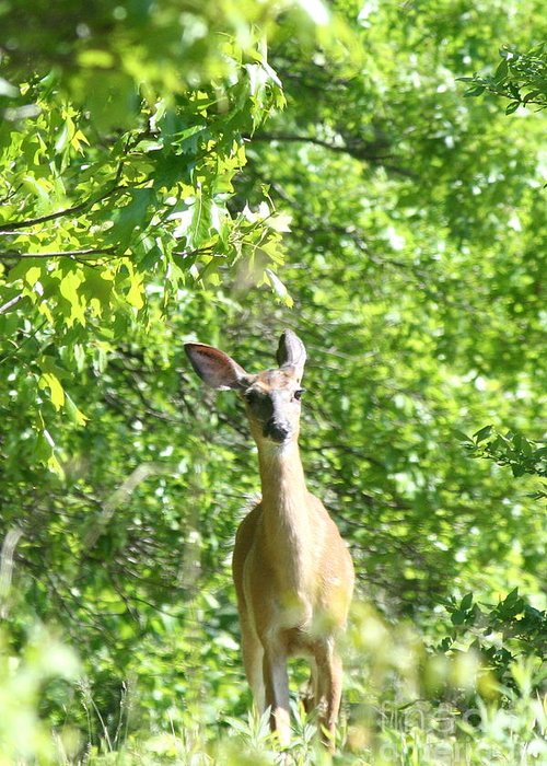 Deer Greeting Card featuring the photograph Taken Aback by Neal Eslinger