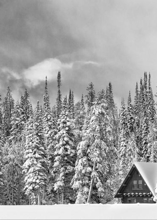 Black & White Greeting Card featuring the photograph Taking Refuge - Grand Teton by Sandra Bronstein
