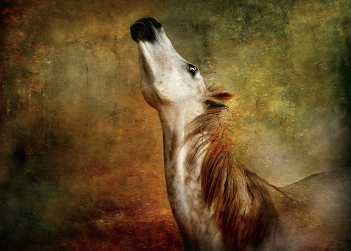 Horse Greeting Card featuring the photograph Talking To The Moon by Dorota Kudyba