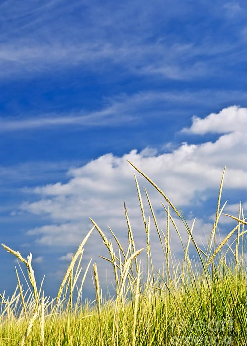 Tall Greeting Card featuring the photograph Tall Grass On Sand Dunes by Elena Elisseeva