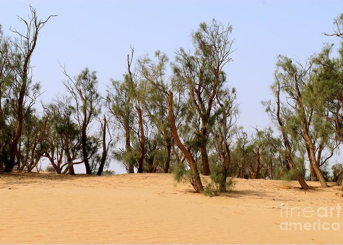 Tamarix Greeting Card featuring the photograph Tamarix Trees On Sand Dune by Dan Yeger