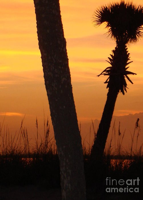 Landscape Greeting Card featuring the photograph Tampa Beach by Aimee Vance