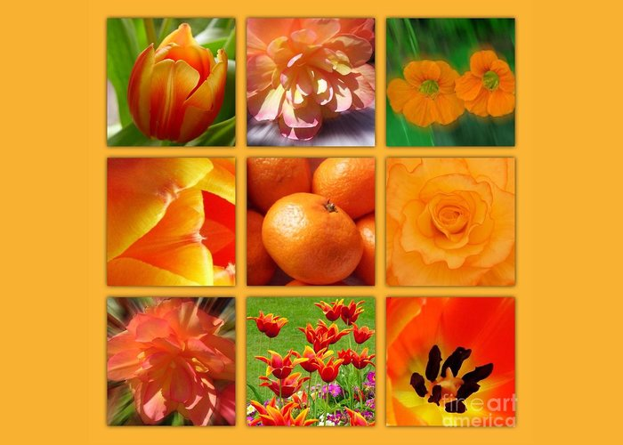 Orange Blossoms Greeting Card featuring the photograph Tangerine Dream Window by Joan-Violet Stretch