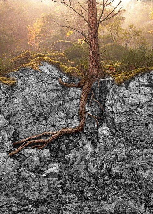 Tree Greeting Card featuring the photograph Taproot by Mary Jo Allen