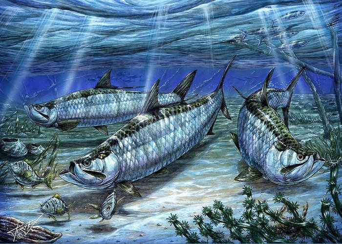 Tarpon Greeting Card featuring the painting Tarpon In Paradise - Sabalo by Terry Fox