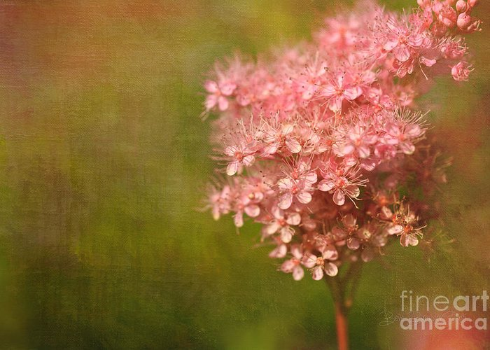Beve Brown-clark Greeting Card featuring the photograph Taste Of Summer by Beve Brown-Clark Photography
