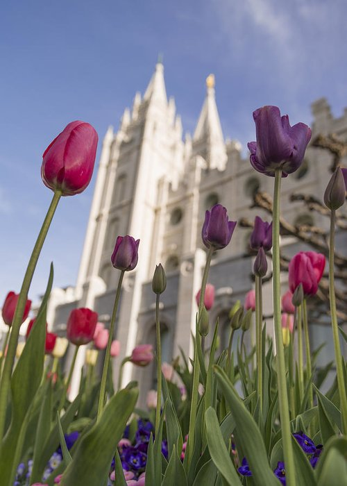 Temple Tulips Greeting Card featuring the photograph Temple Tulips by Chad Dutson