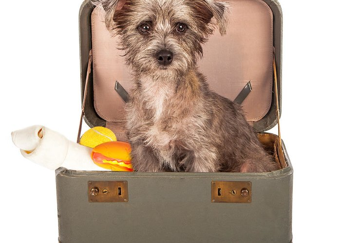 Dog Greeting Card featuring the photograph Terrier Dog In Suitcase by Susan Schmitz