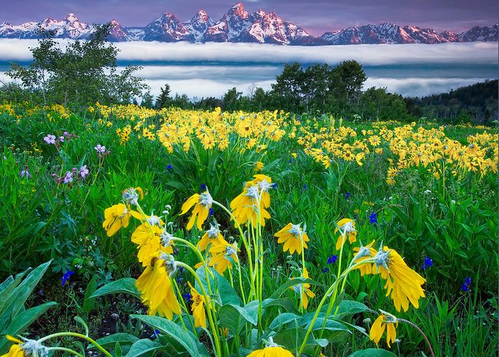 Teton Greeting Card featuring the photograph Teton Spring Wildflowers by Jerry Patterson