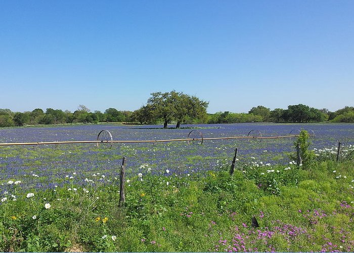 Greeting Card featuring the photograph Texas Blue Bonnets by Shawn Marlow